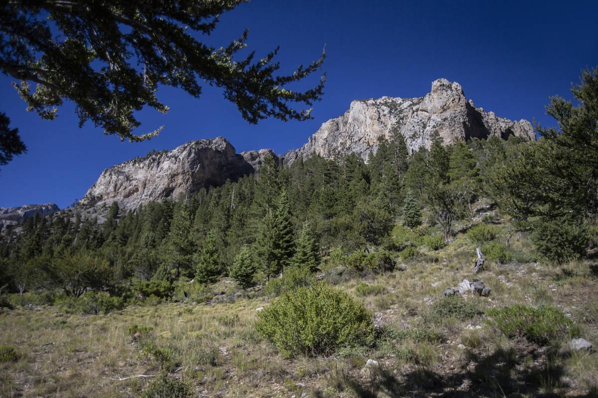 Mount Charleston on Tuesday, July 7, 2020, near Las Vegas. (Benjamin Hager/Las Vegas Review-Jou ...