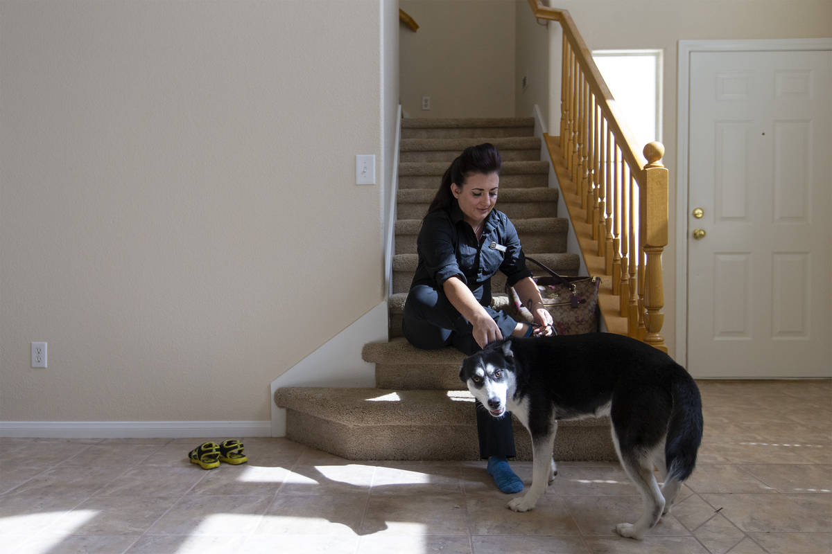 Alexis Cossman is greeted by her roommate's dog, Bella, while she puts on her shoes before head ...