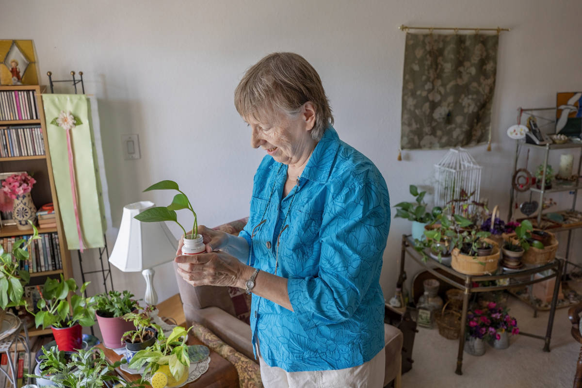 Sunset Garden Club president Nancy Bovill shows her planting system in her home in Henderson on ...