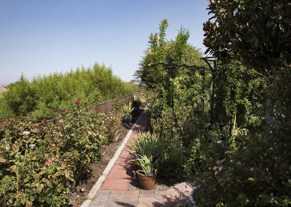 The garden of Marie Kaplan at her home in Henderson, Tuesday, Aug. 4, 2020. She says her plants ...
