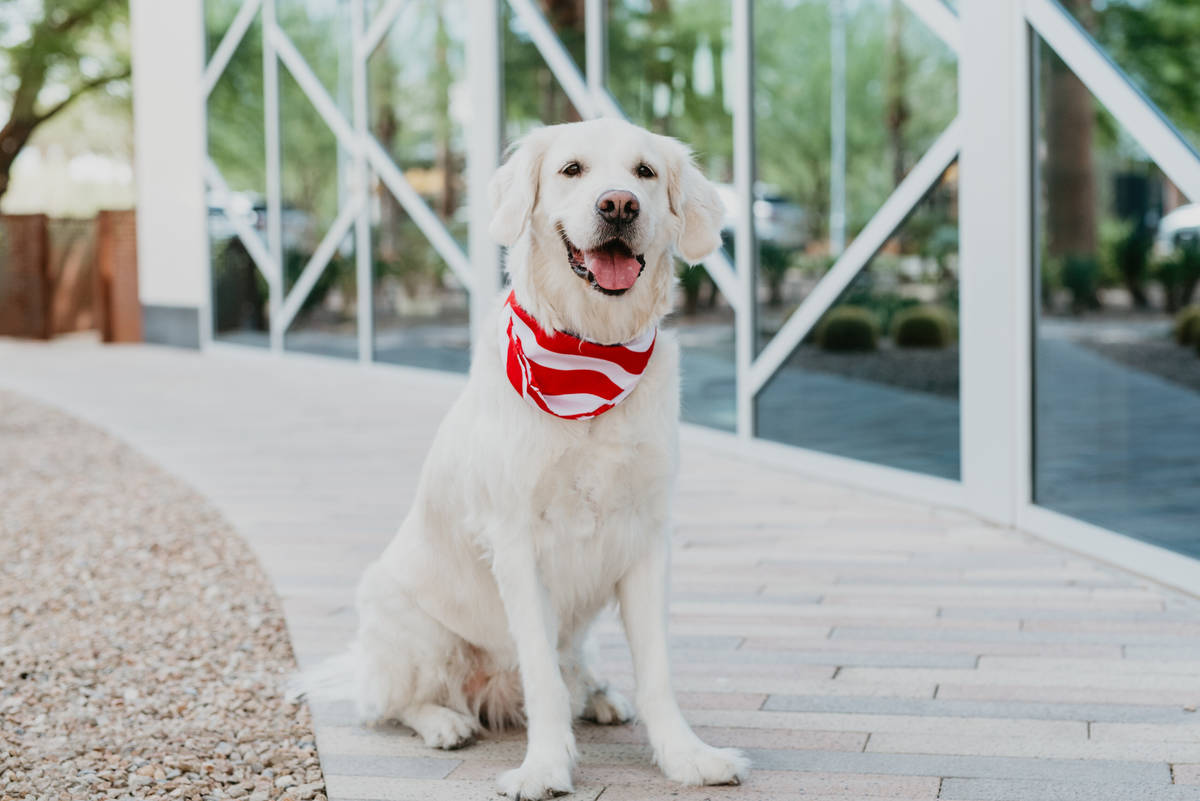 Bianca represented September in the 2020 Dogs of Downtown Summerlin calendar.