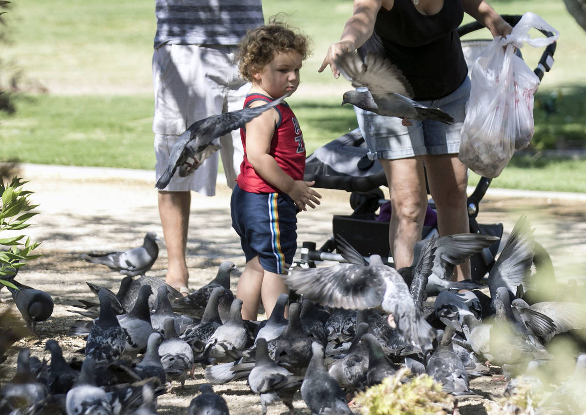 Erick Stetler, 2, watches as his grandmother, who declined to give her name, feeds birds at Sun ...