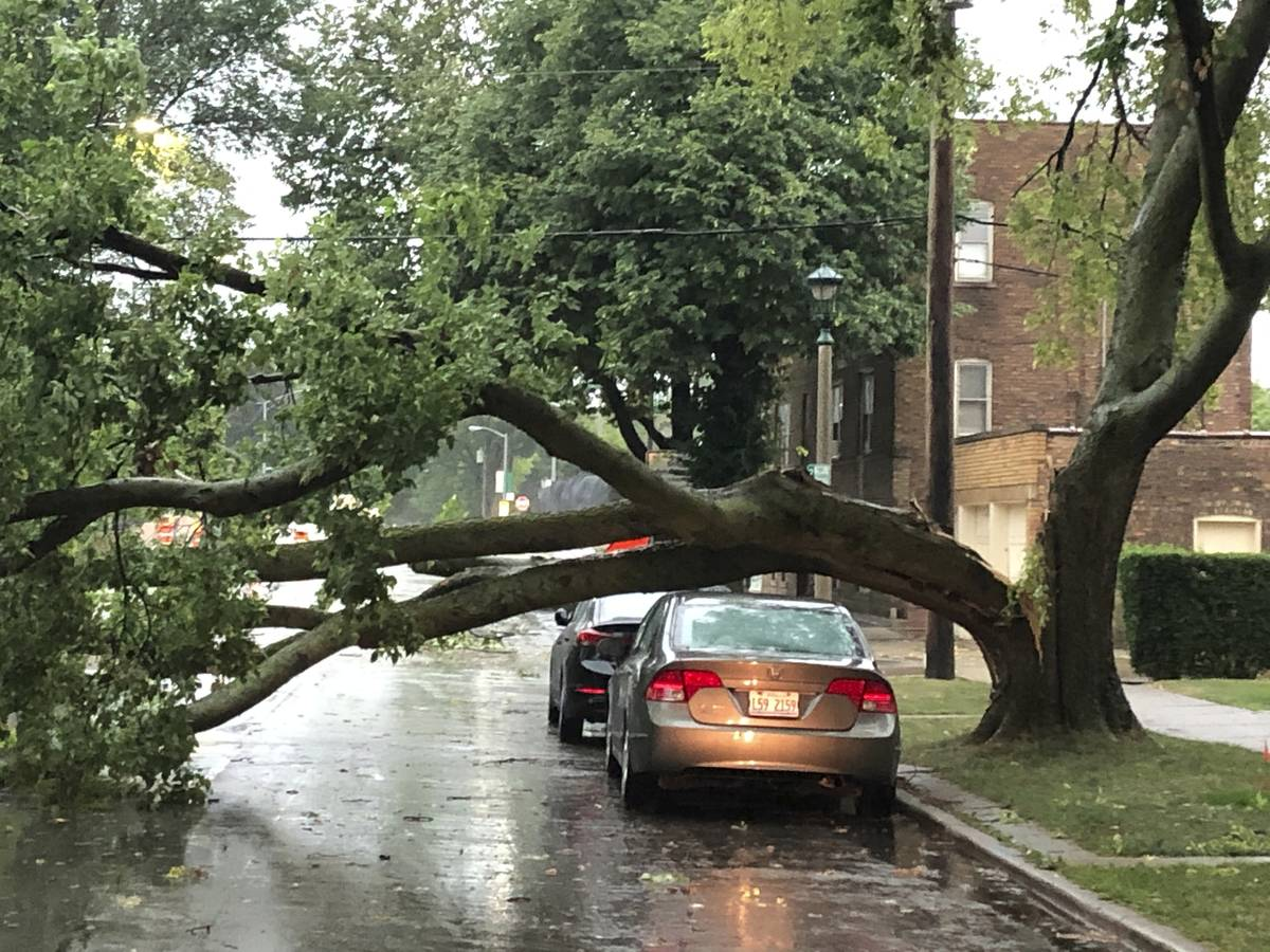 Part of a tree that had split at the trunk lies on a road in Oak Park, Ill., while also appeari ...