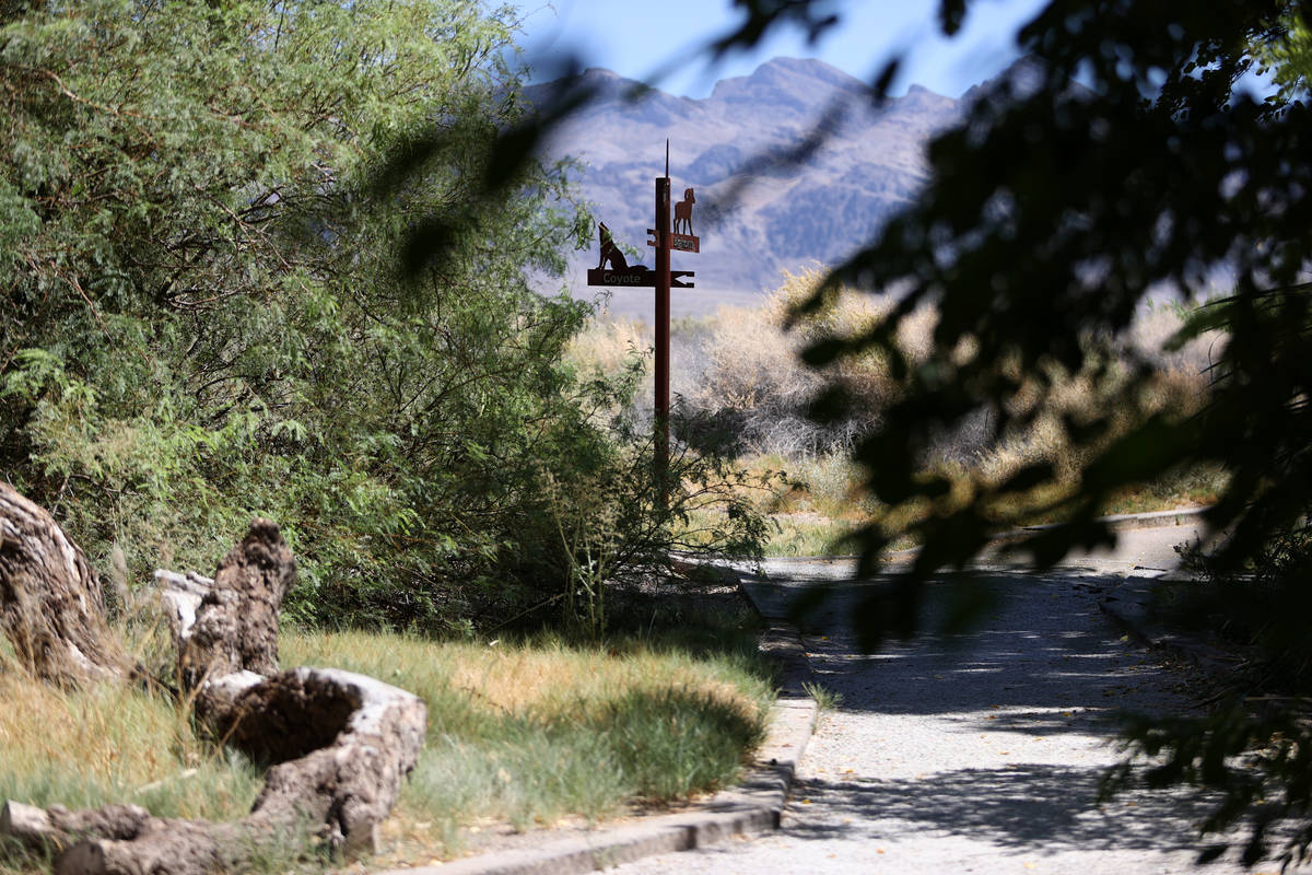 The Desert National Wildlife Refuge in Las Vegas, Wednesday, Aug. 12, 2020. (Erik Verduzco / La ...