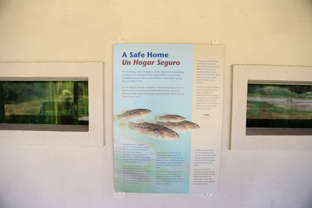 A refugium for Pahrump poolfish at the Desert National Wildlife Refuge in Las Vegas, Friday, Au ...