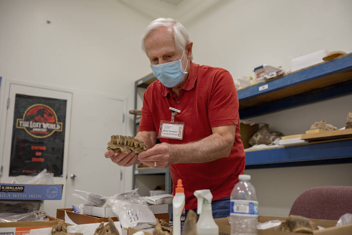 Steve Rowland, paleontologist and professor of geology at UNLV, holds Ice Age fossilized teeth ...