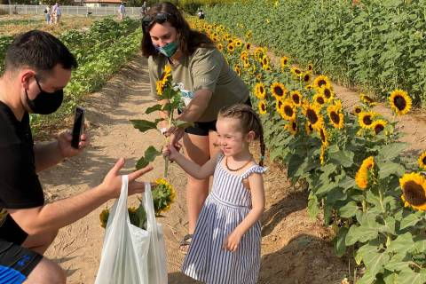 Two-year-old Ellie Froehlich of North Las Vegas loads sunflowers for her mother with the help o ...