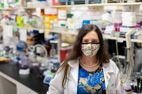 Dr. Amy Stone, assistant professor of microbiology and immunology at Touro University Nevada, p ...