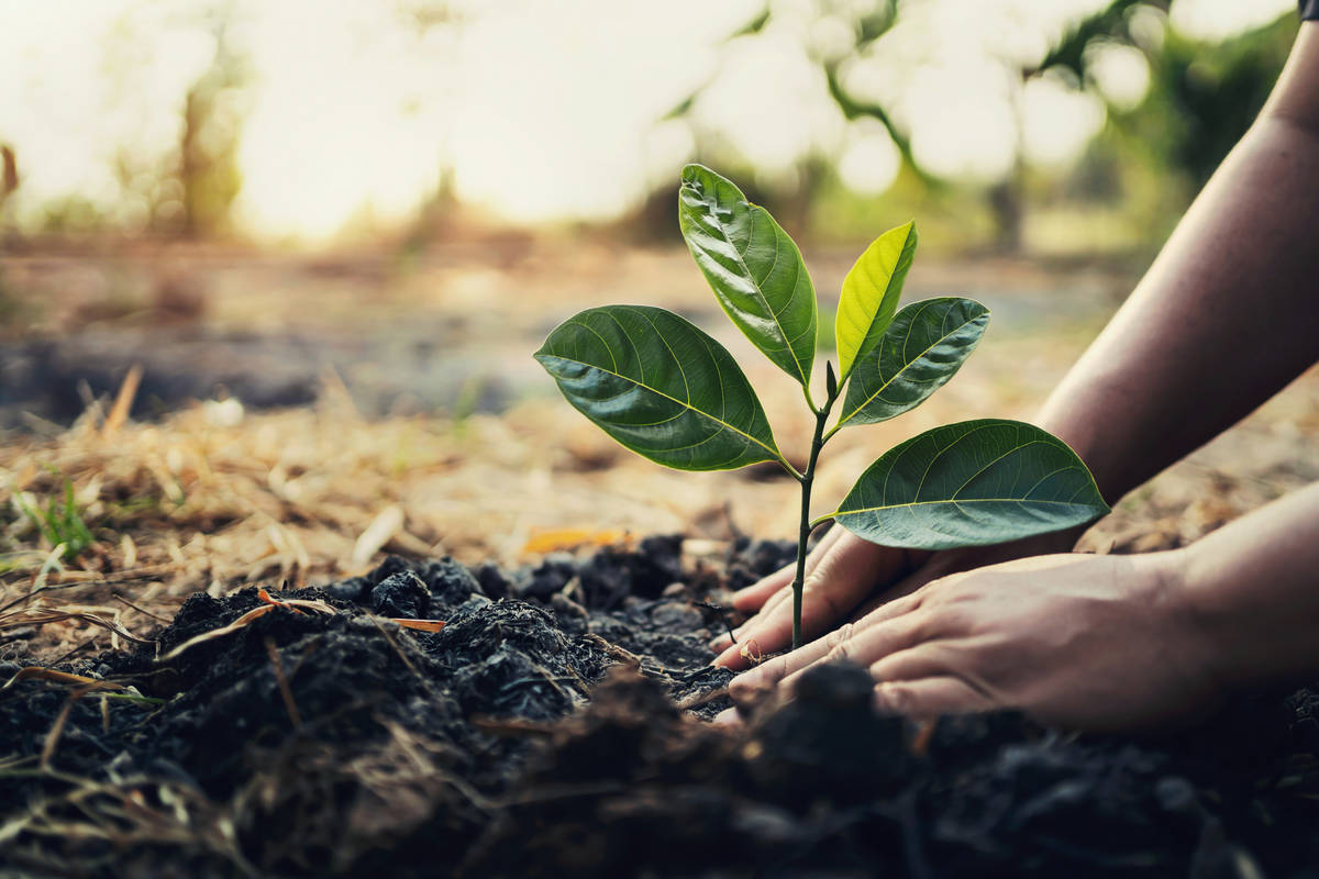 Planting trees in the fall enables root systems to become established and be strong enough to h ...