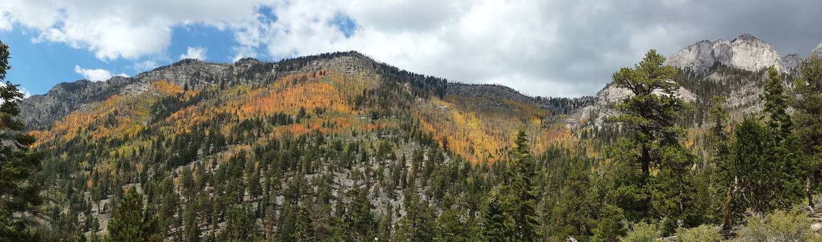 Aspen above 9,000 feet seen from the challenging Trail Canyon hike in a previous September. (Na ...