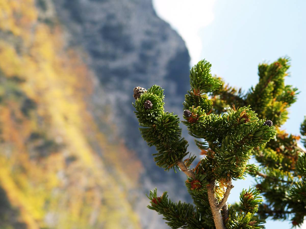 Photos taken of mountainside aspens at higher elevations seen from the path during a Trail Cany ...