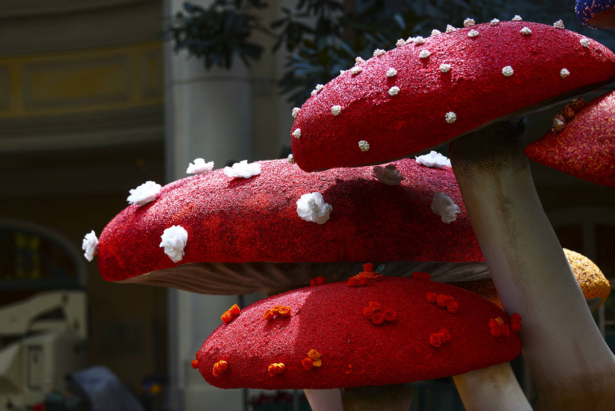 """Mushrooms are in the """"Into the Woods"""" fall display at the Bellagio Conservatory and Botanical G ..."""