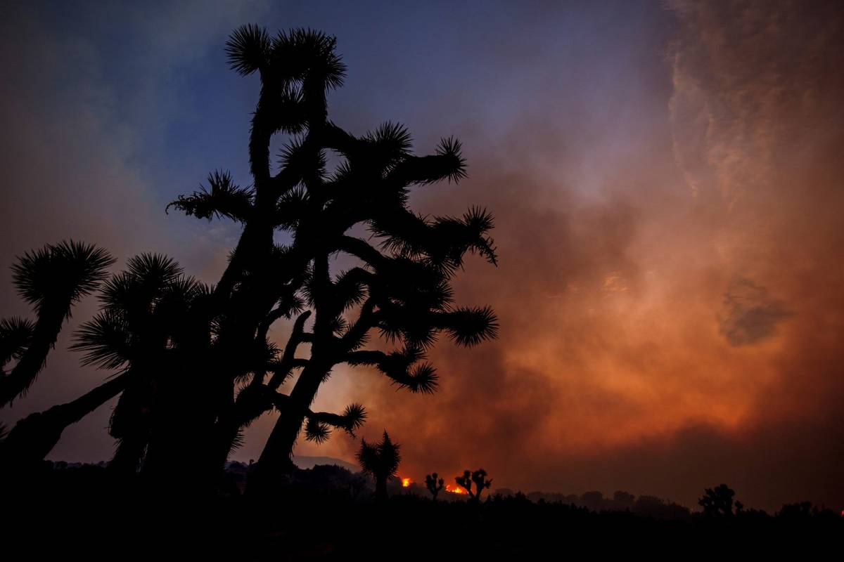 Smoke rises from the Bobcat Fire in Juniper Hills, Calif., Friday, Sept. 18, 2020, with Joshua ...