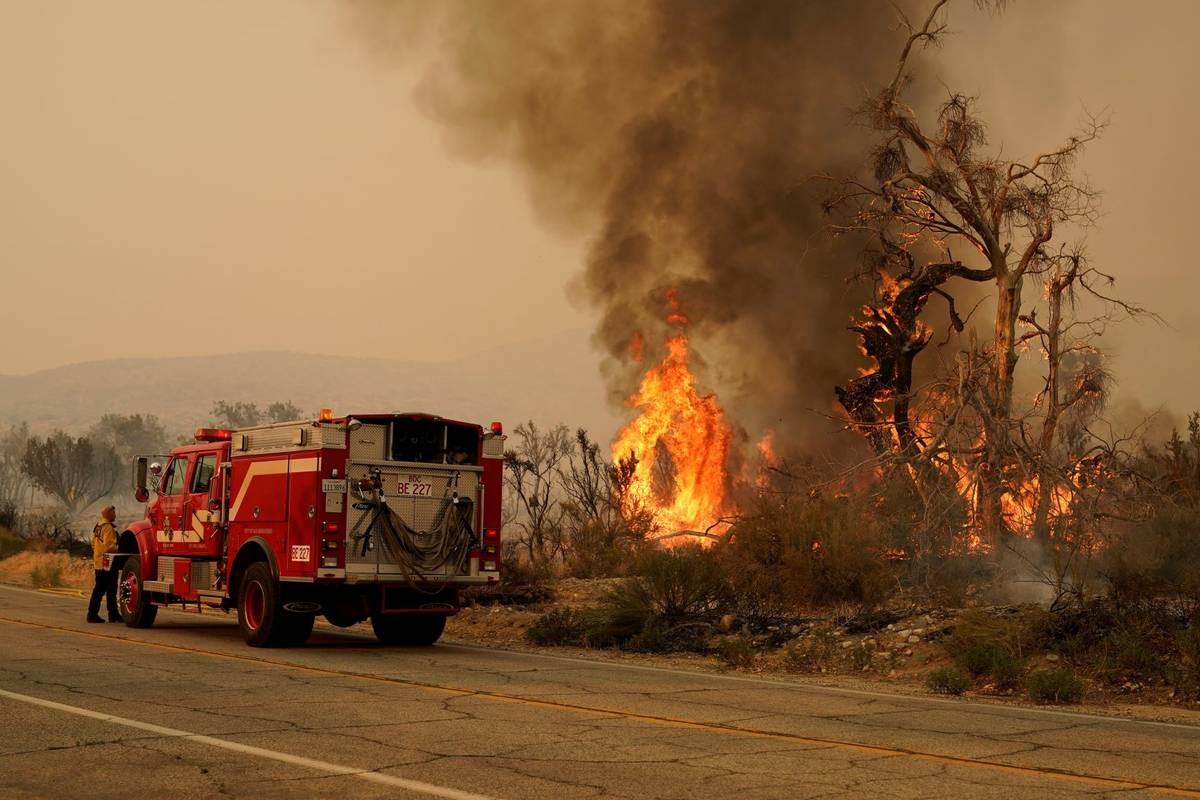 A San Bernardino County Fire Department member keeps an eye on a flareup from the Bobcat Fire o ...