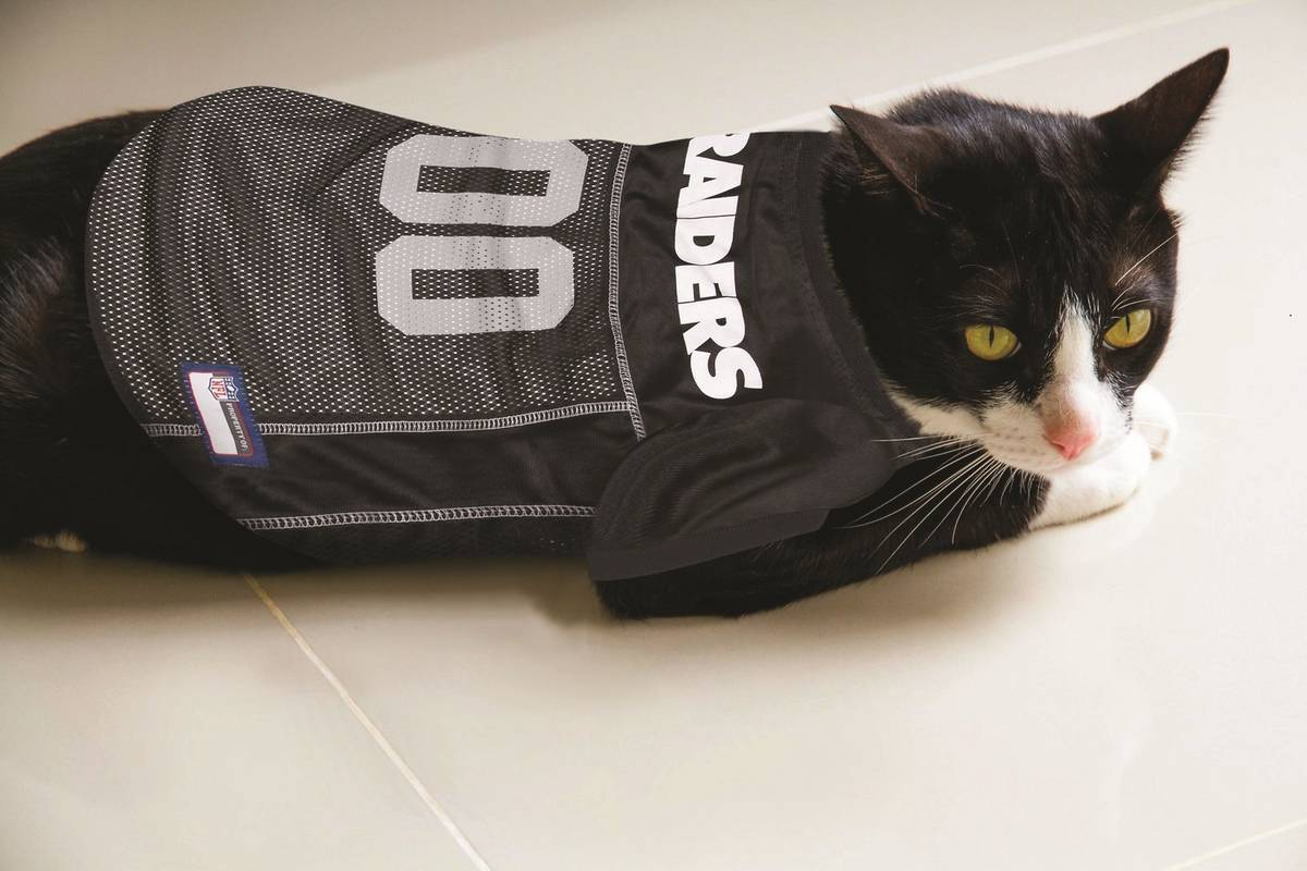 Don't forget your feline: Here's a Raiders jersey suitable for a cat. (Chewy.com)
