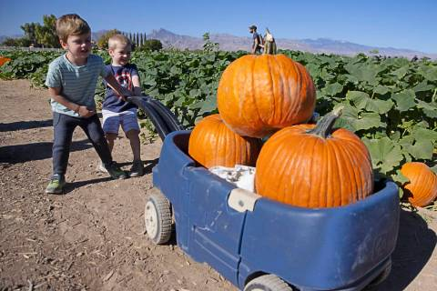 Samuel Honig, 3, left, and his friend Deegan Dorudiani, 3, pull a wagon filled with pumpkins at ...