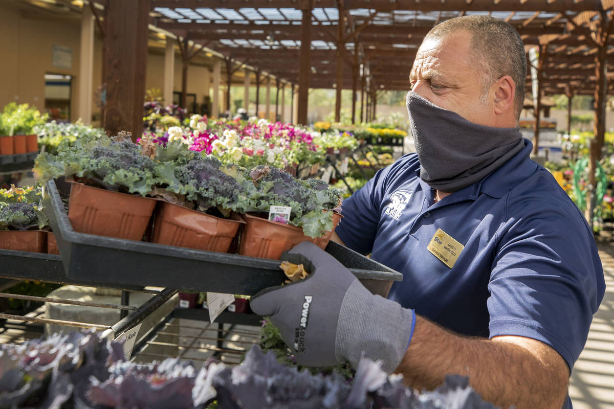 General manager Marco Marrocco organizes plants at Star Nursery off of W Tropicana Ave.,Thursda ...