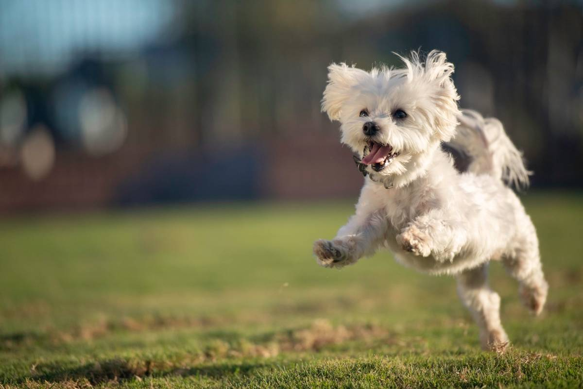 Cadence Cadence, a master-planned community in Henderson caters to dog owners with the Dakota ...