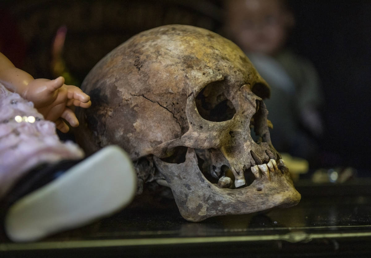 A human skull that carries paranormal energy is seen in Staysha RandallÕs home on Thursday ...
