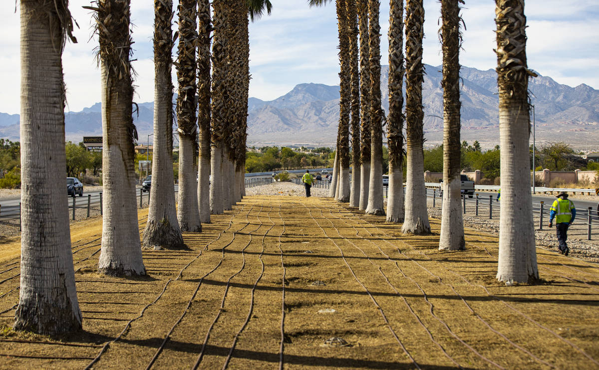 Workers with the BrightView landscaping company walk by new irrigation lines that are being ins ...
