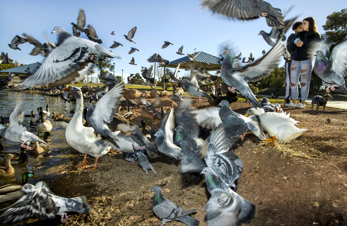(From right) Harley Rose, 16, and Burgandie Turner, 16, as birds scatter while feeding them at ...
