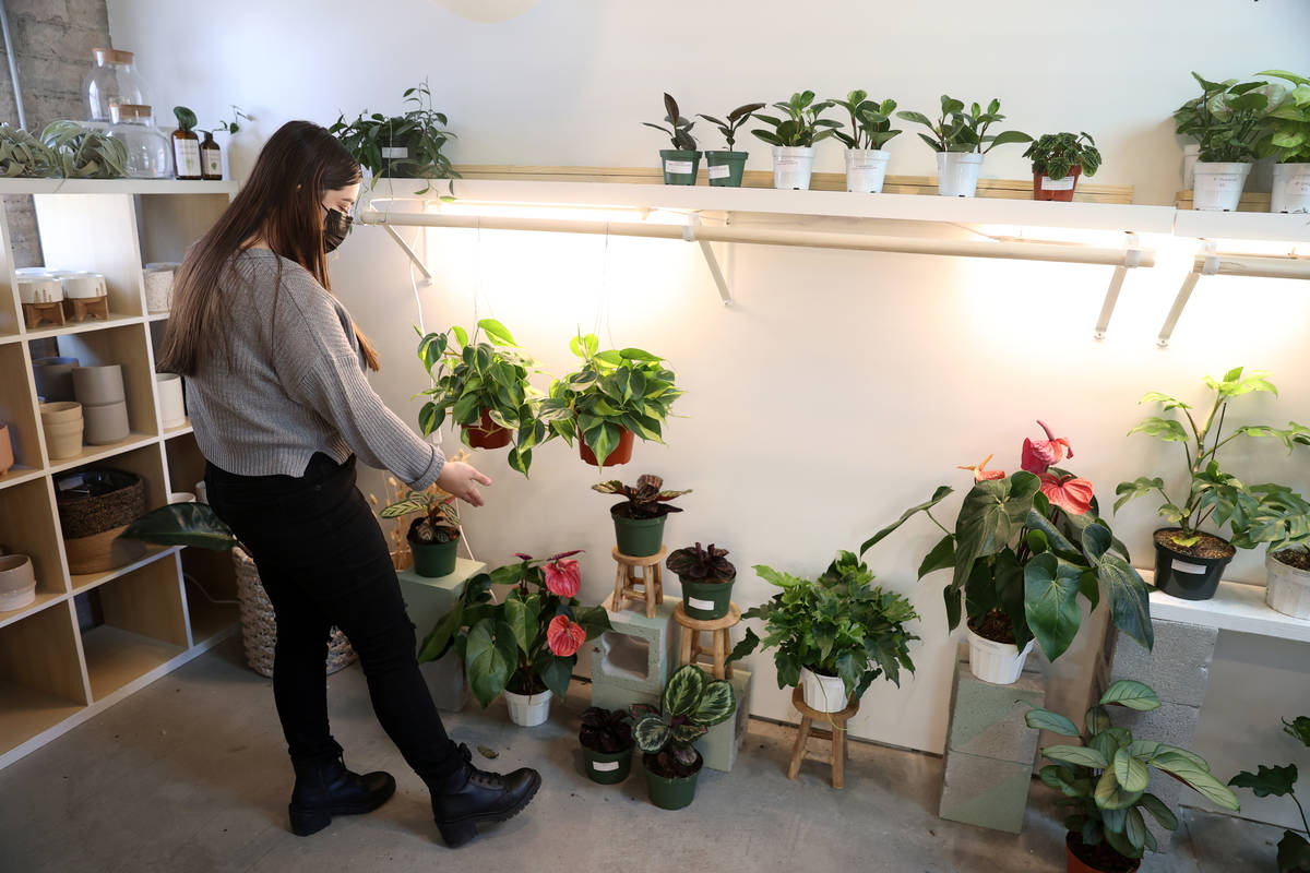Carissa Beasley, owner of the LV Plant Collective store, gives a tour of the plants on sale at ...