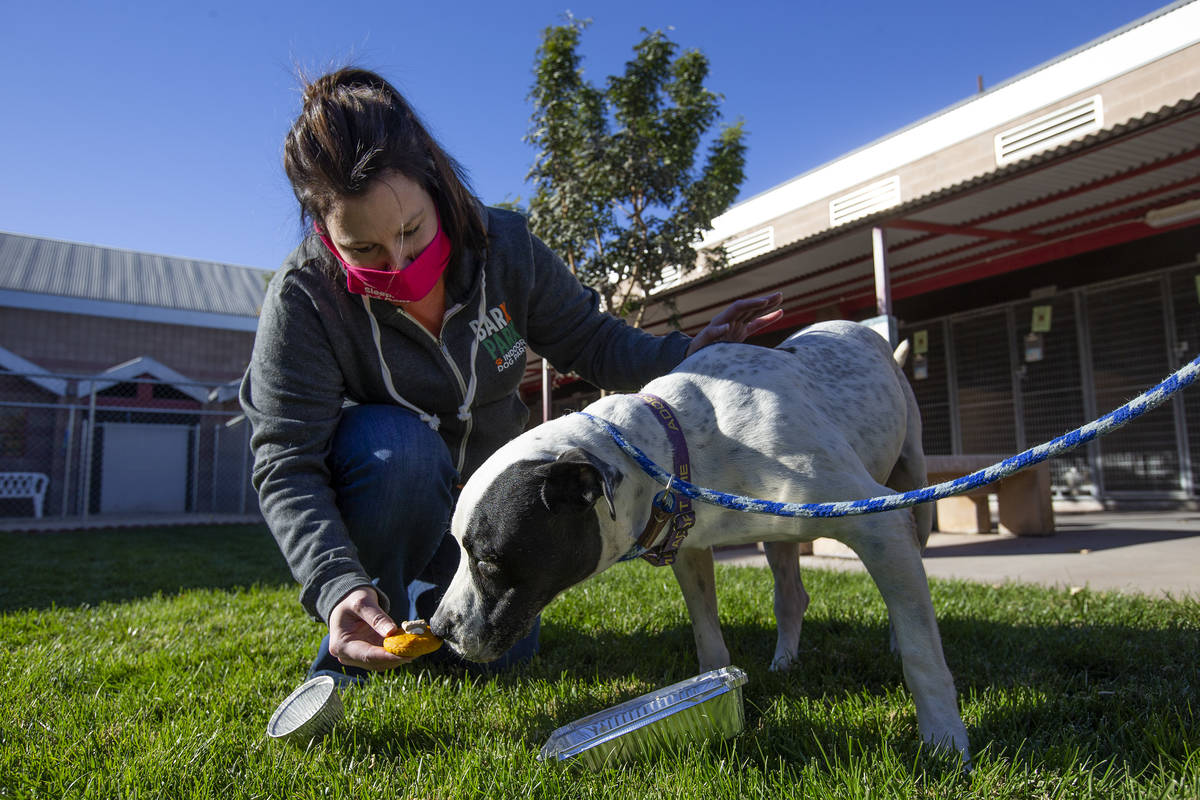 "Jen Freet, owner of Barx Parx, feeds 8-year-old Rocky a ""PUPSgiving"" meal at City of Henderson ..."