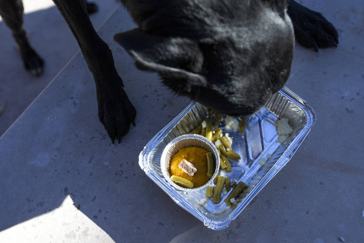 "Dooley, 3, enjoys a ""PUPSgiving"" meal donated by Barx Parx at City of Henderson Animal Care and ..."