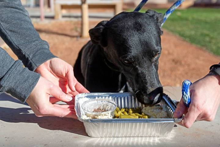 "3-year-old Dooley enjoys a ""PUPSgiving"" meal donated by Barx Parx at City of Henderson Animal C ..."