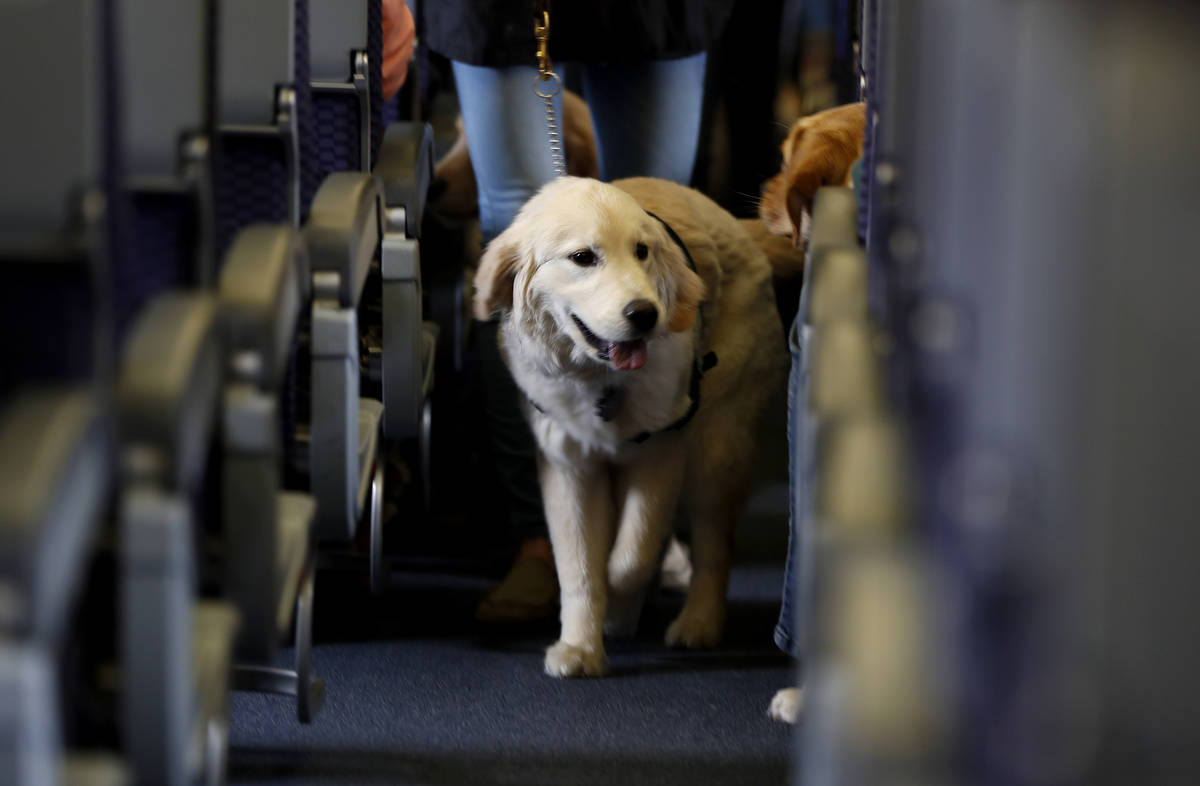 FILE - In this April 1, 2017 file photo, a service dog strolls through the isle inside a United ...