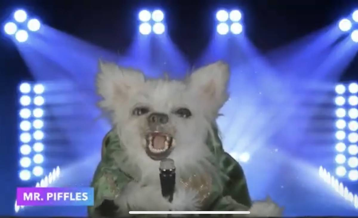 """Mr. Piffles, Piff The Magic Dragon's sidekick, is shown on a screen grab during Tony Hsieh's """"L ..."""