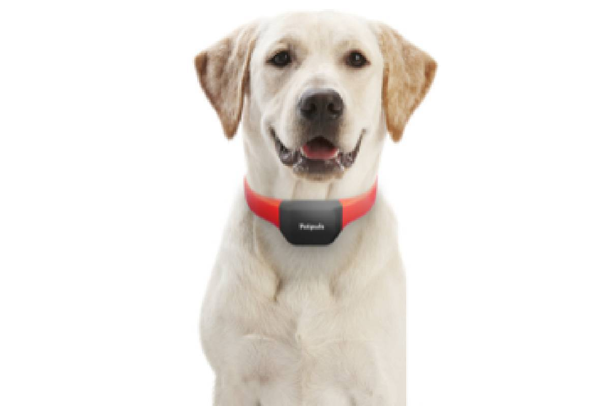 The Petpuls AI-powered dog collar has voice recognition technology and works as an activity and ...