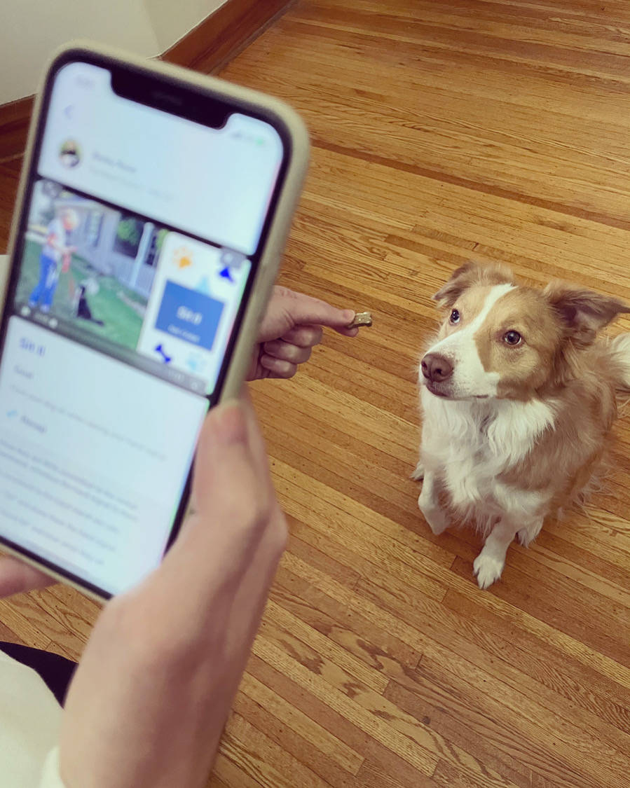 Sniffy Labs will offer dog training videos on your phone. (Sniffy Labs)