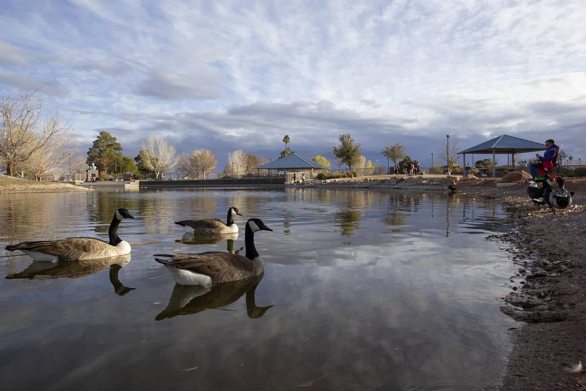 Geese swim at Lorenzi Park on Saturday, Jan. 23, 2021, in Las Vegas. (Ellen Schmidt/Las Vegas R ...