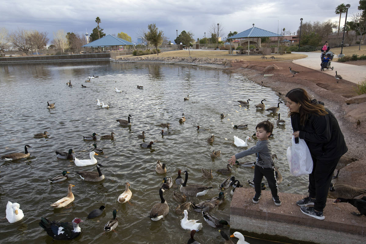 Aiden Robinson, 3, and his grandmother Isela Caldera feed the ducks and geese at Lorenzi Park o ...