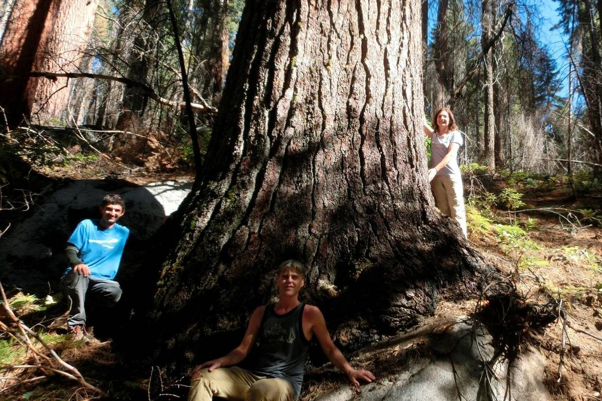 Tree hunters, from left, Ben Fetzer, Michael W. Taylor, Maria Mircheva pose with the second tal ...