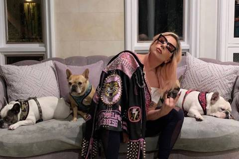 Lady Gaga is shown with her three French bulldogs in an Instagram post on March 14, 2020. (@Lad ...