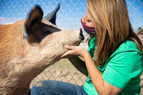 Tara Pike, founder of All Friends Animal Sanctuary, pets Brandy Cookie Bear, a farm pig, at the ...