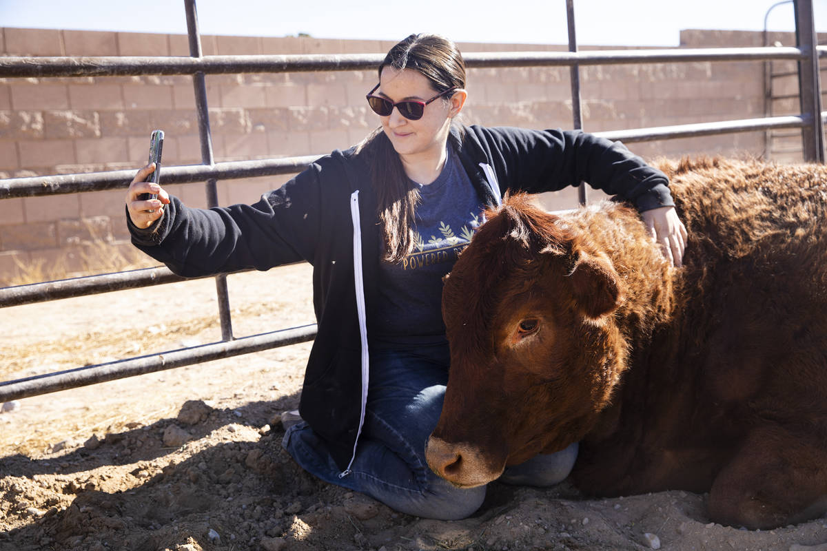 Volunteer Kat Rawlinson pets Mae, a rescued cow, at All Friends Animal Sanctuary in Las Vegas, ...