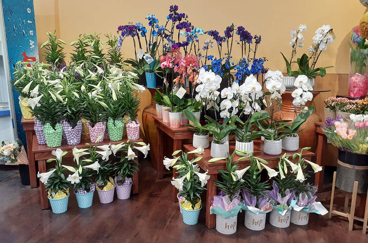 Easter lilies were available at Smith's Food & Drug store at Valle Verde Drive and the 215 Belt ...