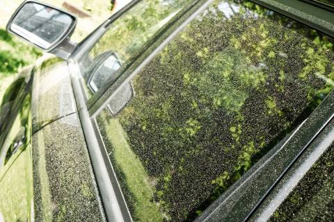Pollen on car (Getty Images)