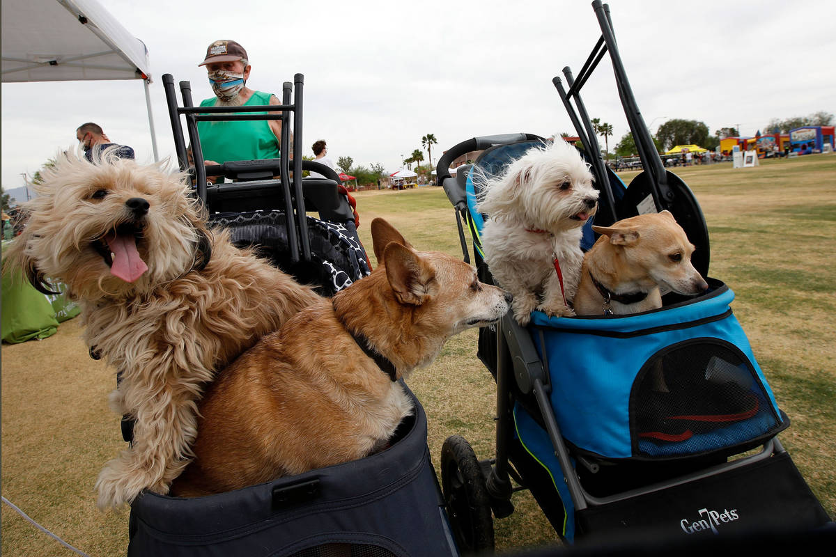 Bob Manning of Las Vegas, background, attends a Cinco de Mayo celebration with his dogs Jessa, ...