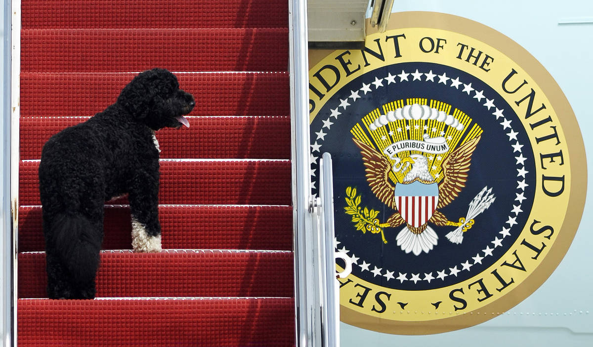 FILE - This Aug. 4, 2010 file photo shows presidential pet Bo climbing the stairs of Air Force ...