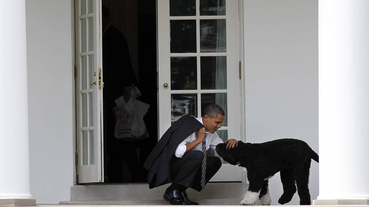 FILE - In this March 15, 2012 file photo, President Barack Obama pets the family dog Bo, a Port ...