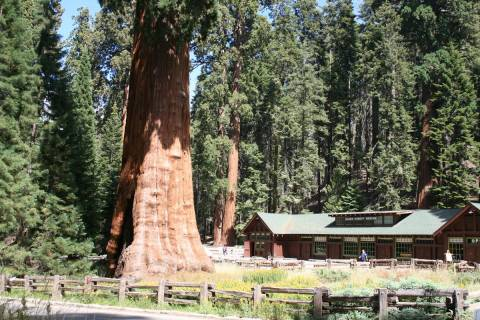 The Giant Forest Museum in Sequoia National Park. (Deborah Wall Las Vegas Review-Journal)