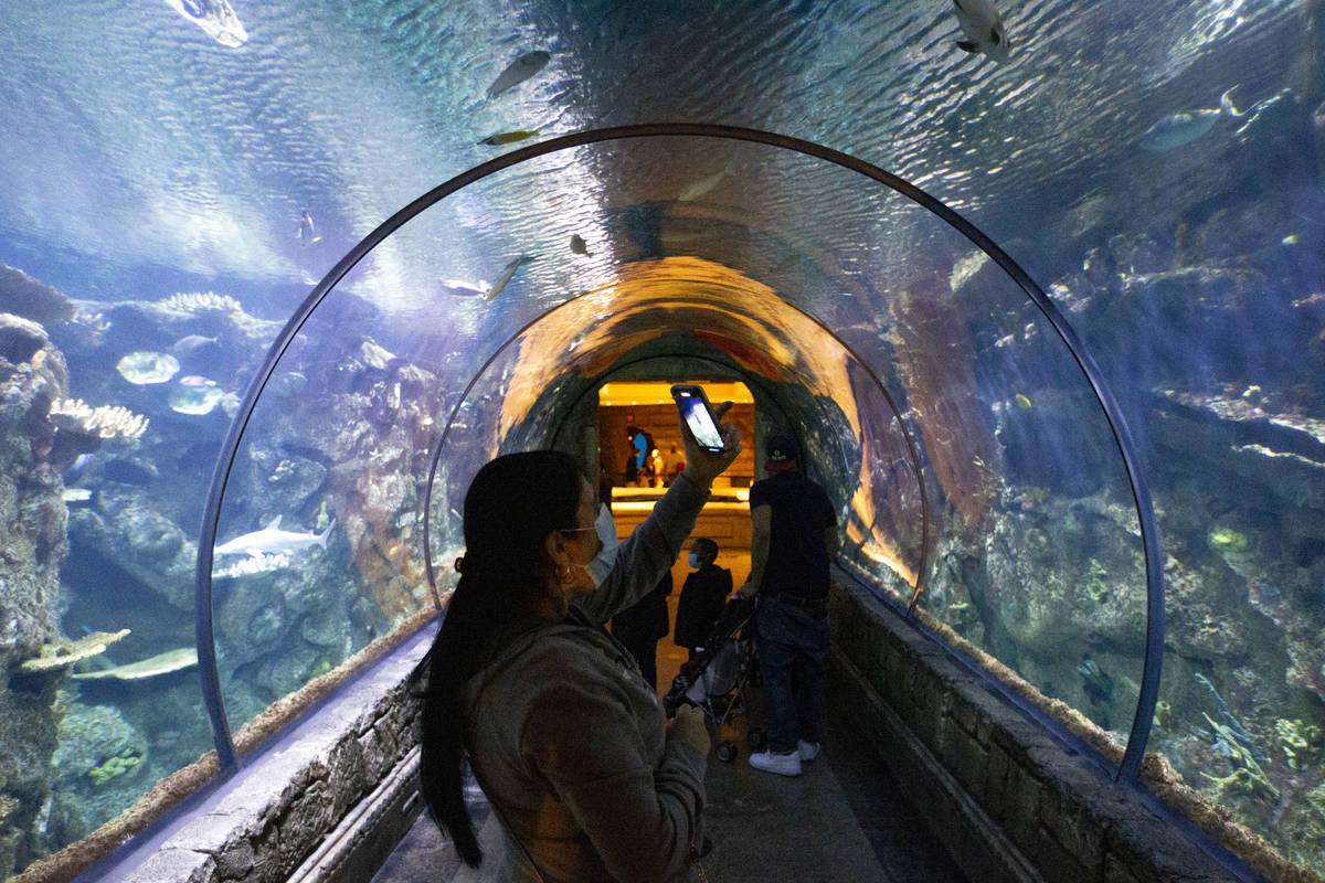 Visitors to the Shark Reef Aquarium at Mandalay Bay take photos throughout the experience on Mo ...