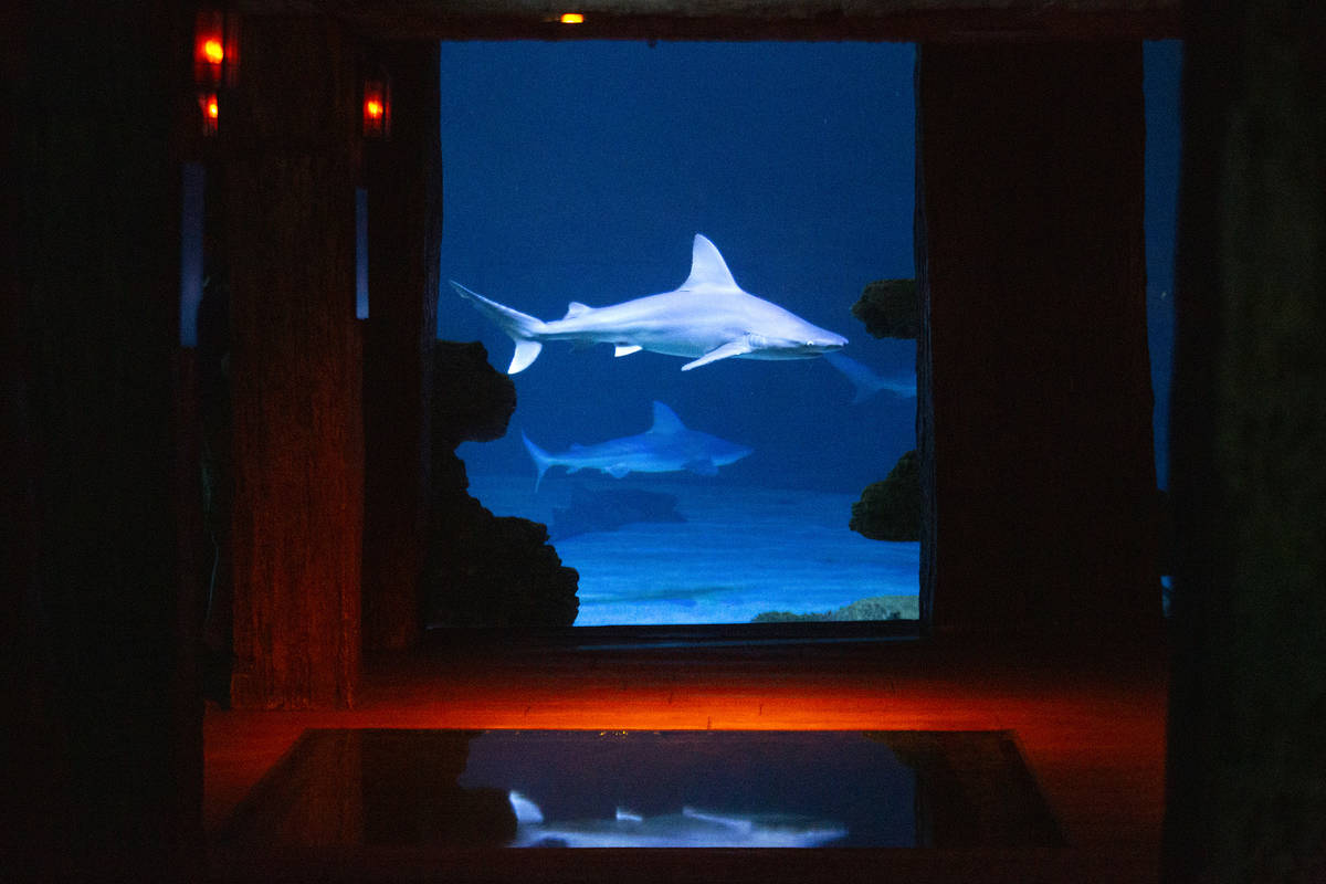 Sharks swim in their aquarium at the Shark Reef Aquarium at Mandalay Bay on Monday, Nov. 30, 20 ...