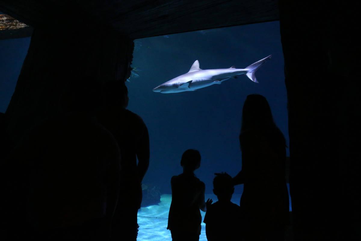 Visitors check out the aquarium at Shark Reef at Mandalay Bay in Las Vegas Monday, July 22, 201 ...