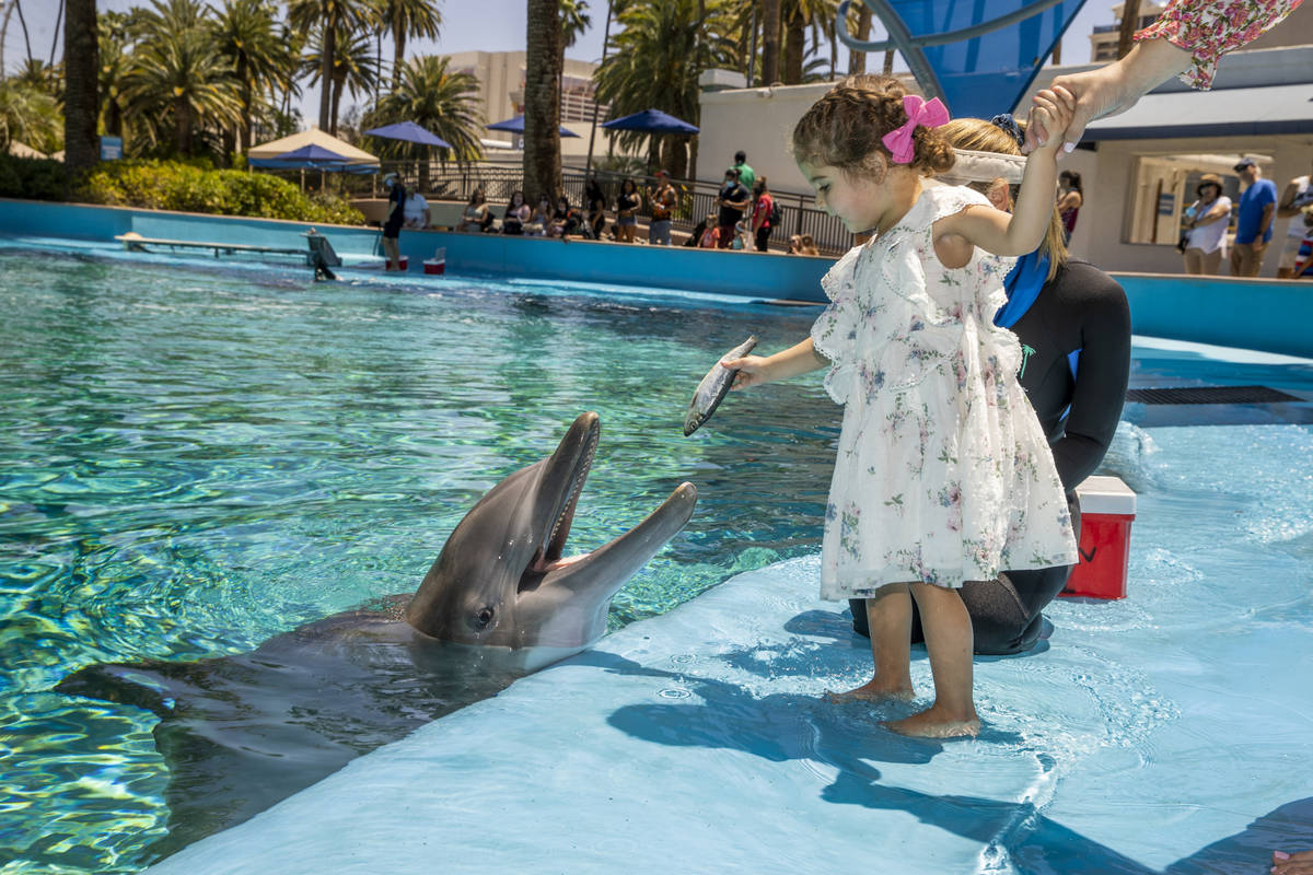 Sophie Santos, 3, center, feeds Maverick with instructions from Dolphin Care Specialist Jen Sch ...