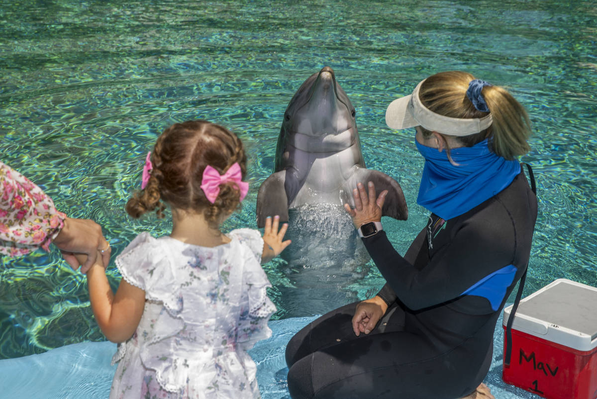 Sophie Santos, 3, left, waves goodbye to Maverick with Dolphin Care Specialist Jen Schwab, righ ...